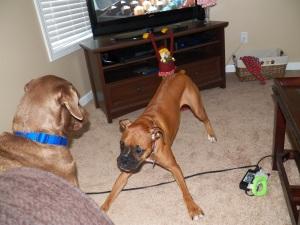 Krypto and Lola